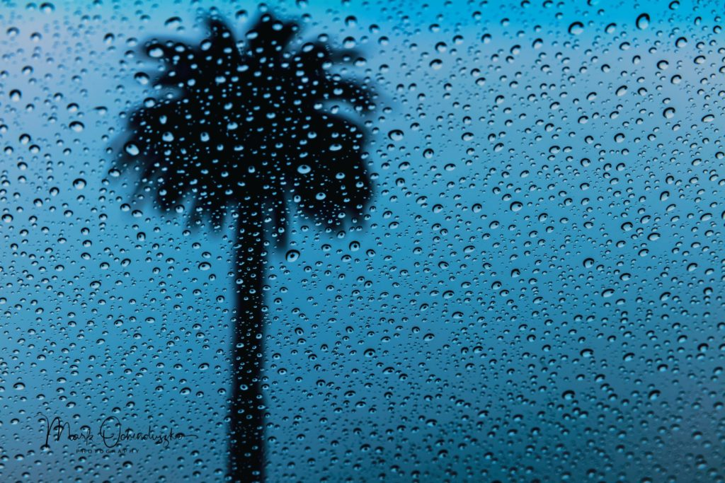 Mark Ochenduszko - Palm Tree Raindrops